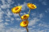 webflowers.jpg